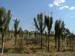 Autres surprises de la végétation les chênes